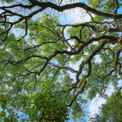 Svako drvo lista iznova – Organiziranje