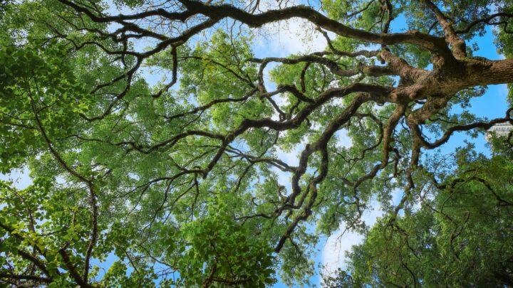 Svako drvo lista iznova – Organiziranje (3./4.2021.)